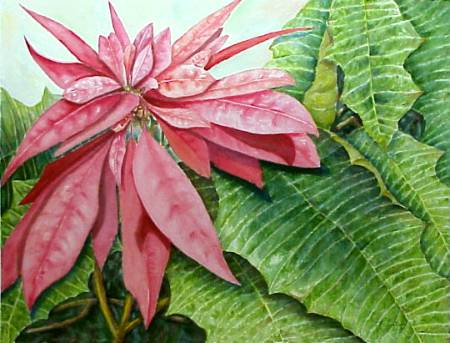 Poinsettia Painting